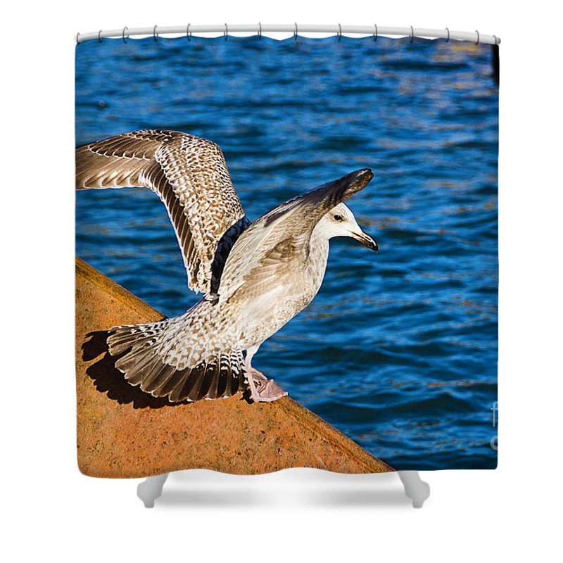Gull Shower Curtain featuring the photograph Immature Herring Gull At The Harbour by Susie Peek
