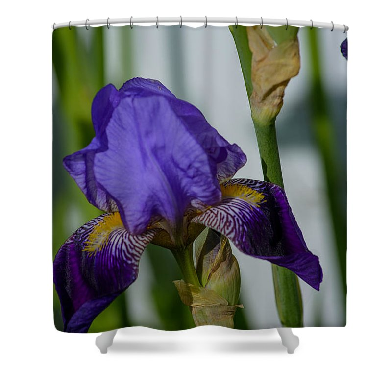 Iris Shower Curtain featuring the photograph Impossible Imagined Iris by Tikvah's Hope