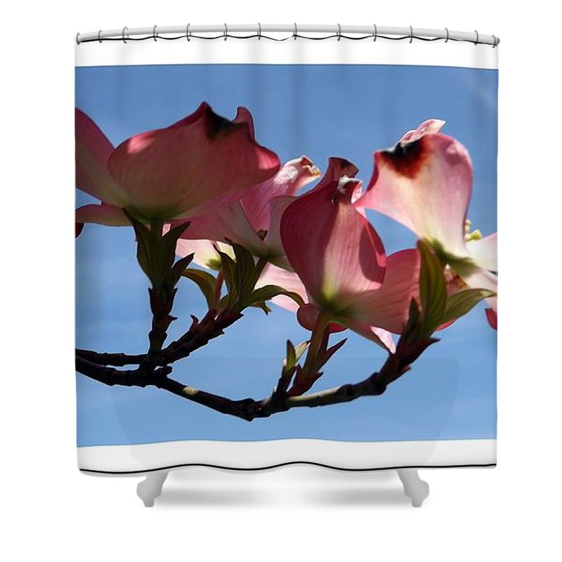 Dogwood Shower Curtain featuring the photograph In All Its Glory by Sara Raber