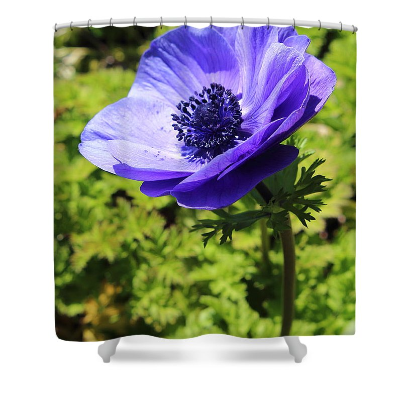 Pa Shower Curtain featuring the photograph In Bloom by Stephen Hobbs