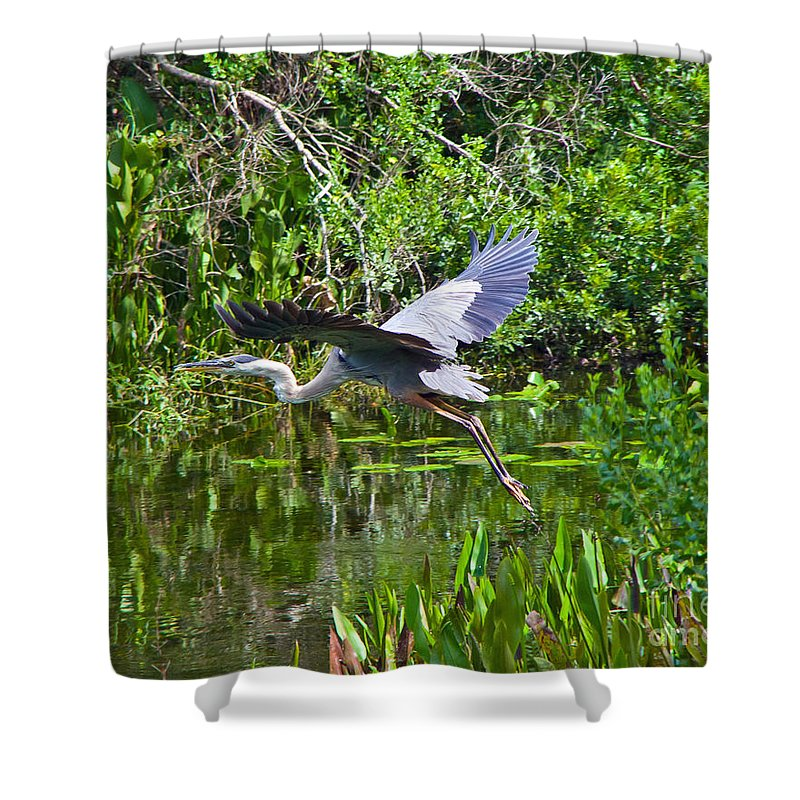 Great Blue Heron Shower Curtain featuring the photograph In Flight by Stephen Whalen