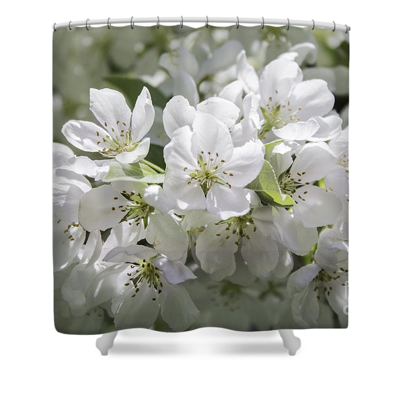 Crab Apple Shower Curtain featuring the photograph In Full Bloom by Arlene Carmel