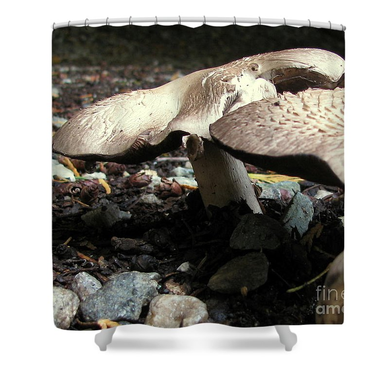 Mushroom Shower Curtain featuring the photograph In The Dark by Leone Lund