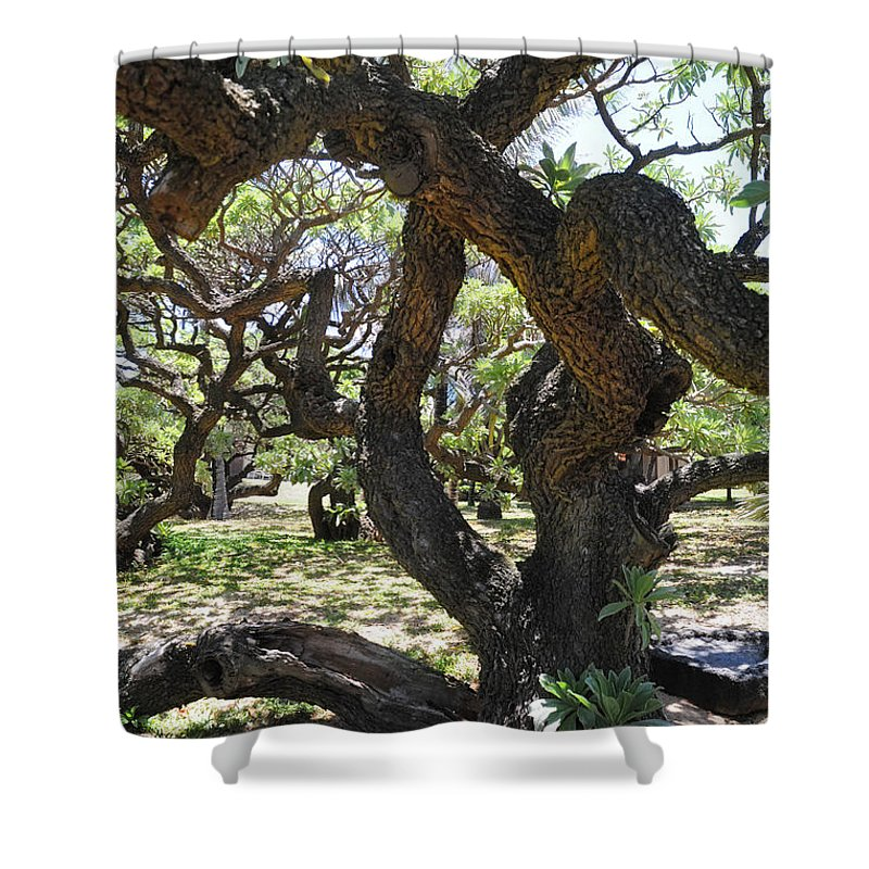 Tree Shower Curtain featuring the photograph In The Depth Of Enchanting Forest IIi by Jenny Rainbow