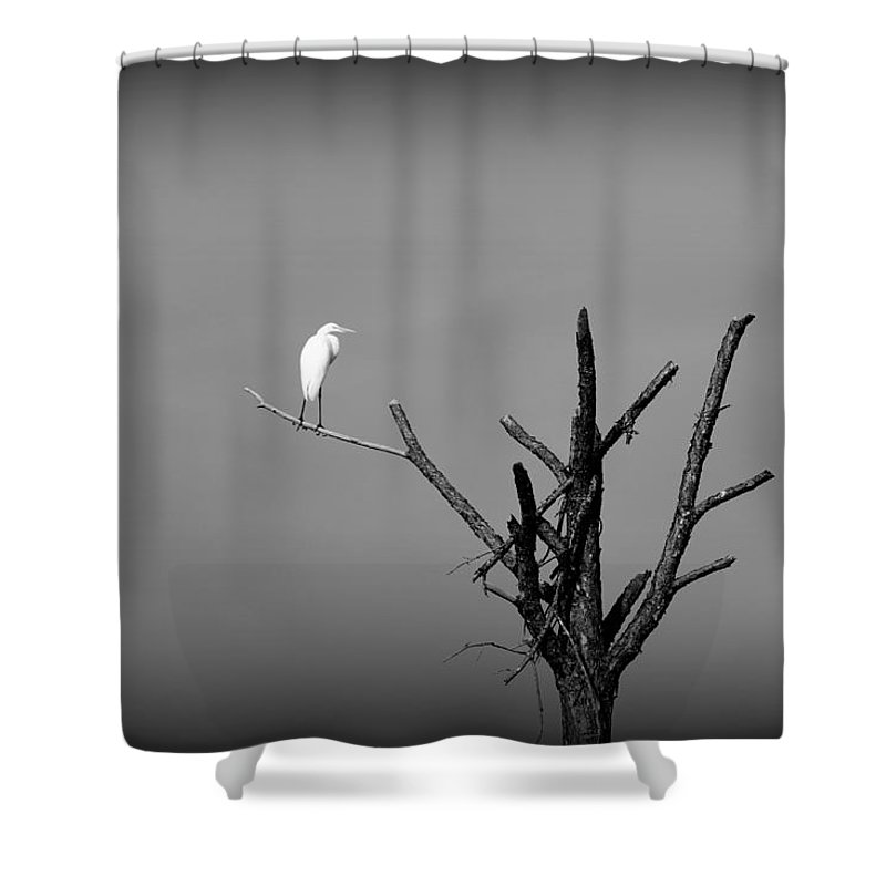 Bird Shower Curtain featuring the photograph In The Forest - Black And White by May Photography
