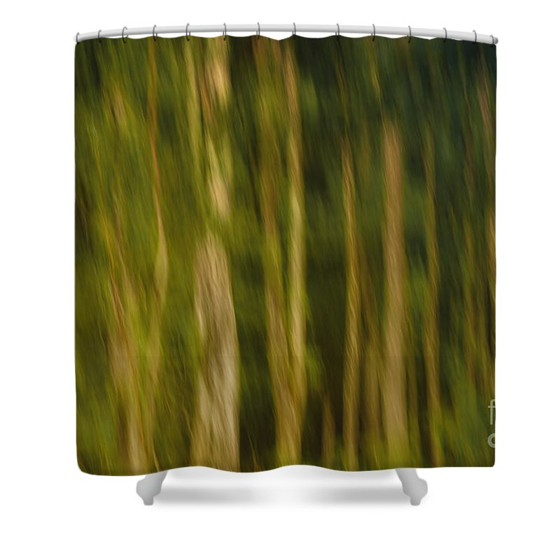 Photo Shower Curtain featuring the photograph In The Forest by Jutta Maria Pusl