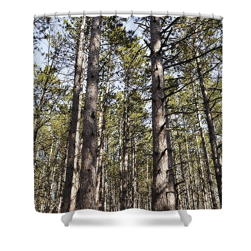 Forest Shower Curtain featuring the photograph In The Forest by Verana Stark