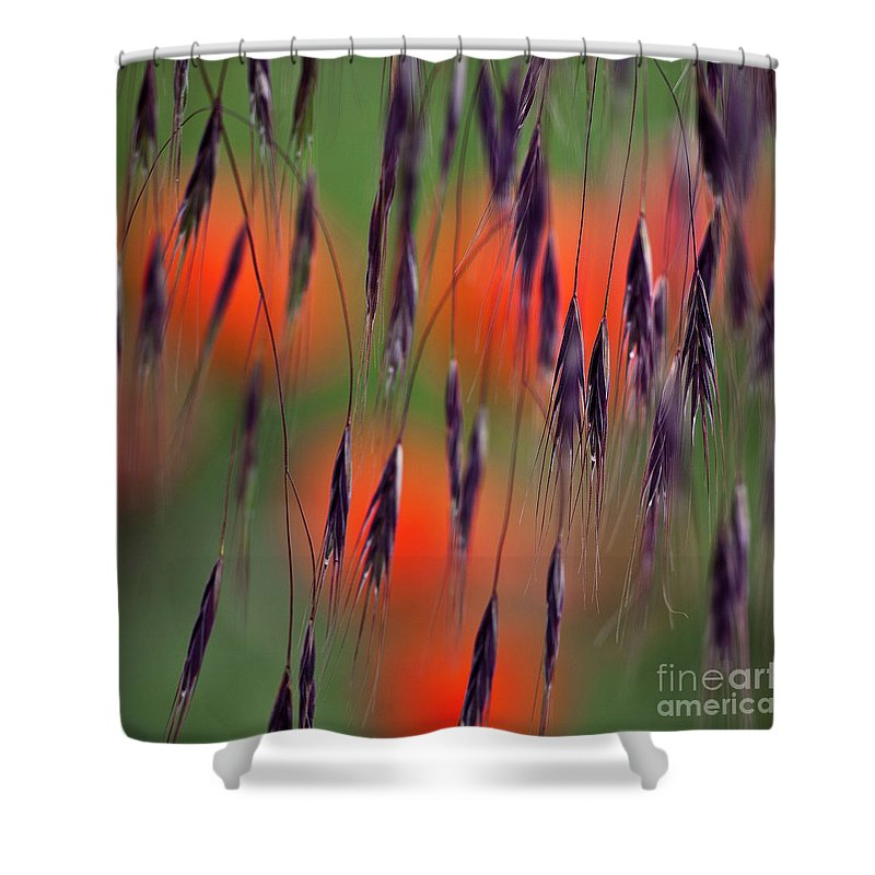Abstract Shower Curtain featuring the photograph In The Meadow by Heiko Koehrer-Wagner