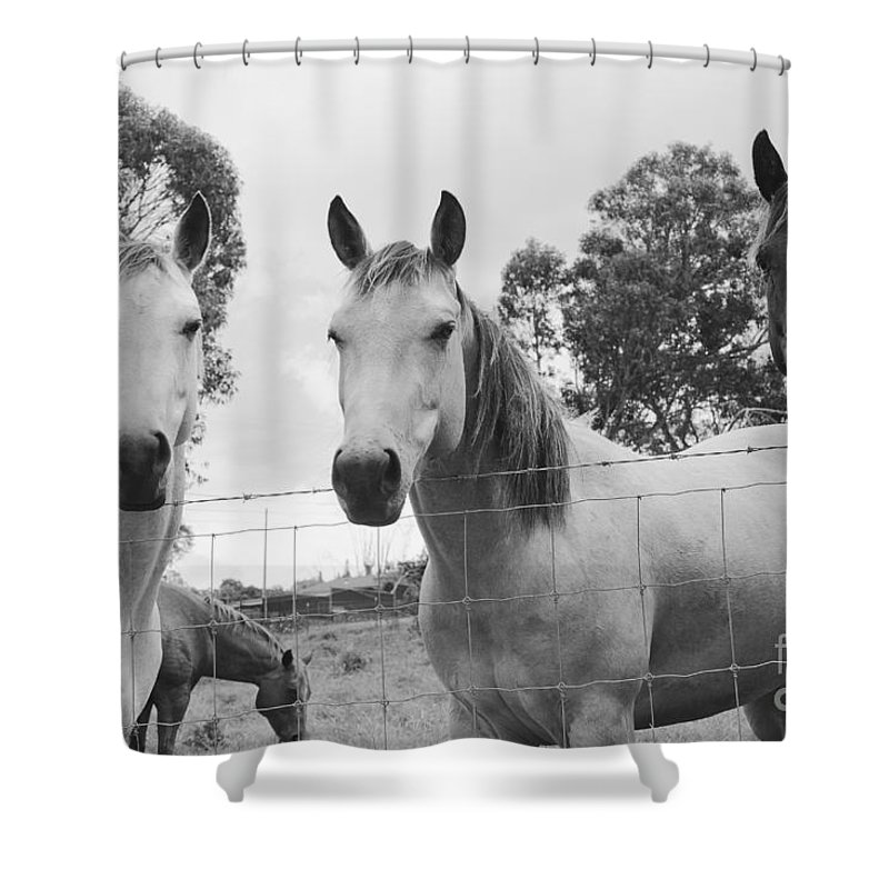 Horses Shower Curtain featuring the photograph In The Open Air . . . by Sharon Mau