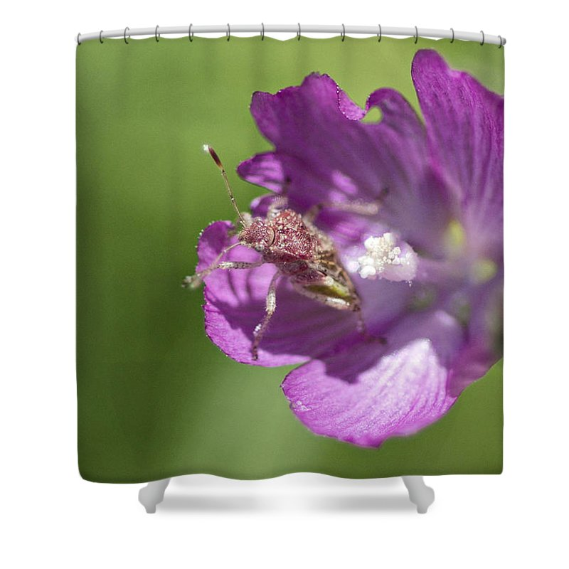 Pink Shower Curtain featuring the photograph In The Pink by Betty Depee