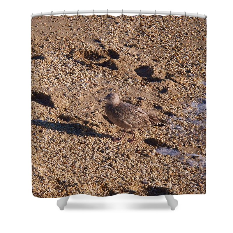Gravel Shower Curtain featuring the photograph In The Stone Surf Gravel Cape May Nj by Eric Schiabor