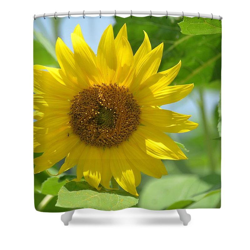 In The Sunflower Field Shower Curtain featuring the photograph In The Sunflower Field by Maria Urso