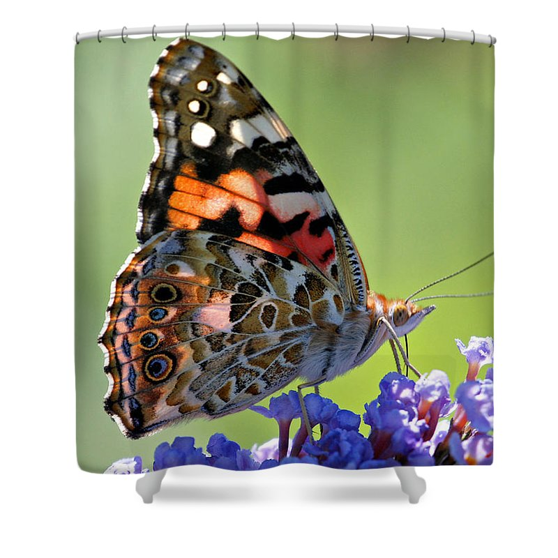 Butterfly Shower Curtain featuring the photograph In The Sunlight by Sandy Keeton