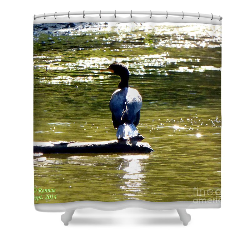 Sun Shower Curtain featuring the photograph In The Warmth Of The Sun by Rennae Christman