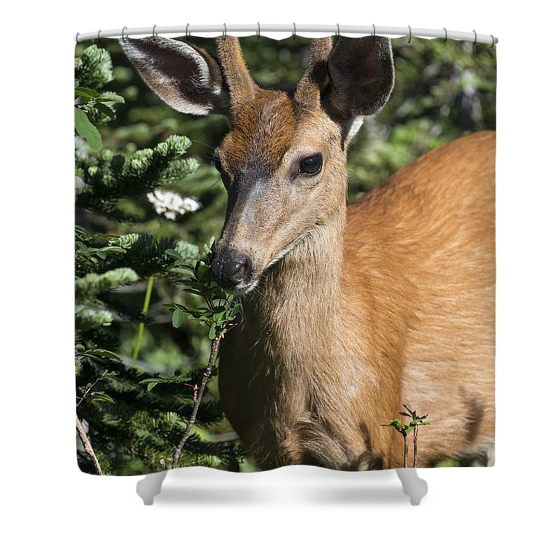 Buck Shower Curtain featuring the photograph In Velvet by Mike Dawson