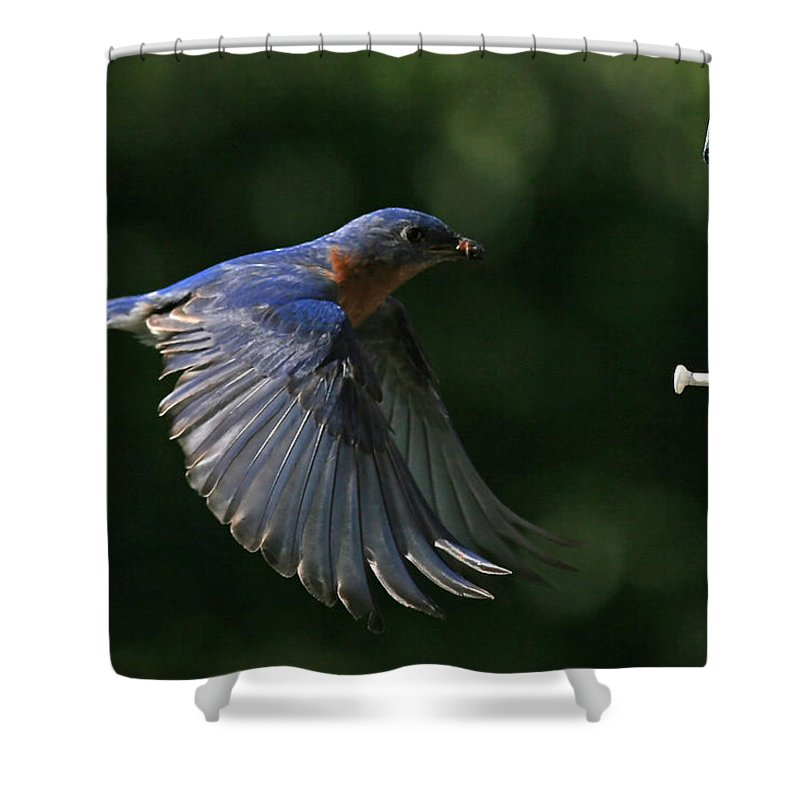 Bluebird Shower Curtain featuring the photograph Incoming by Douglas Stucky