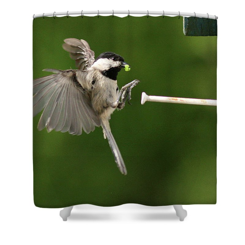 Black-capped Shower Curtain featuring the photograph Incoming II by Douglas Stucky