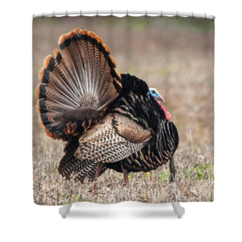 Wild Shower Curtain featuring the photograph Indifference by Richard Kitchen