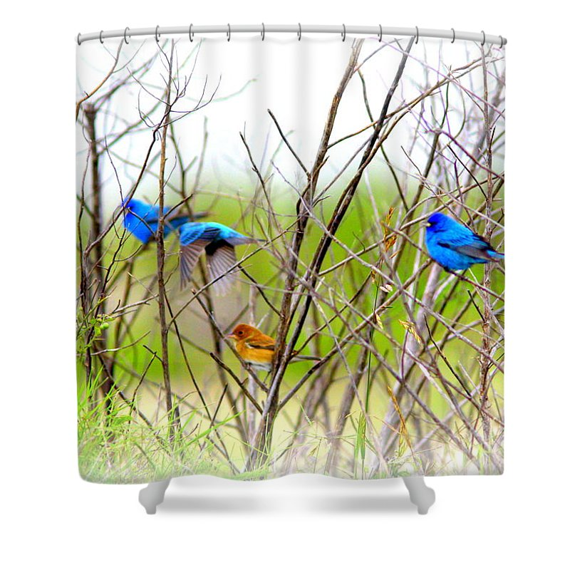 Indigo Bunting Shower Curtain featuring the photograph Indigo Bunting - 4 by Travis Truelove