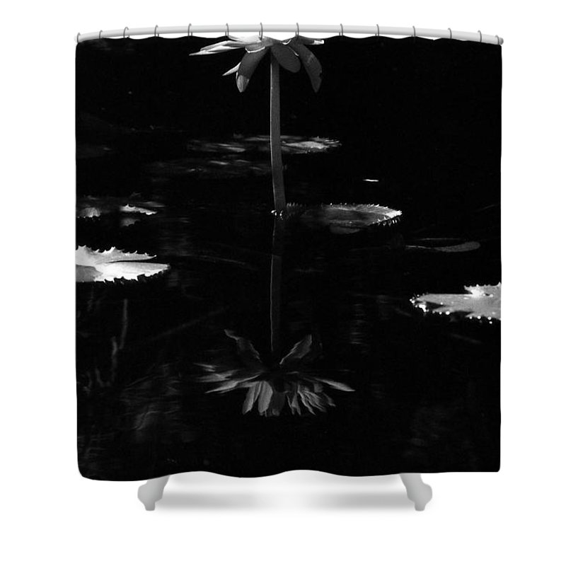 Water Lily Shower Curtain featuring the photograph Infrared - Water Lily 03 by Pamela Critchlow