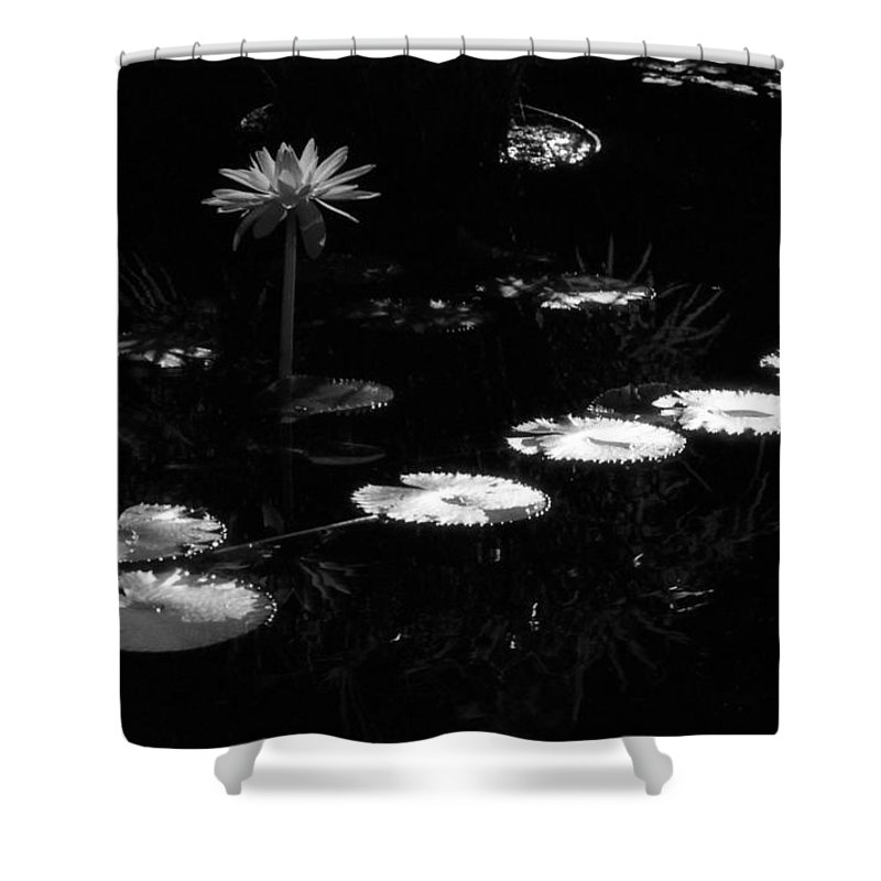Water Lily Shower Curtain featuring the photograph Infrared - Water Lily And Lily Pads by Pamela Critchlow