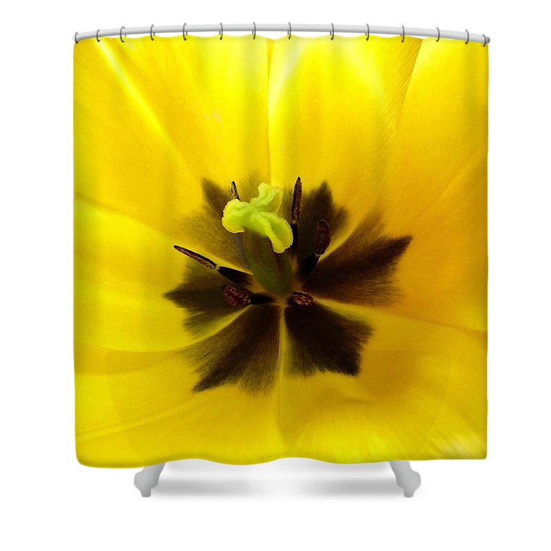 Inner Tulip Macro Shower Curtain featuring the photograph Inner Tulip Macro by Will Borden