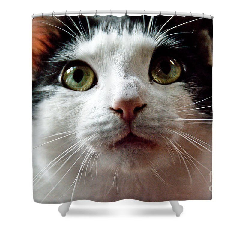 Cats Shower Curtain featuring the photograph Innocense by Cheryl Baxter