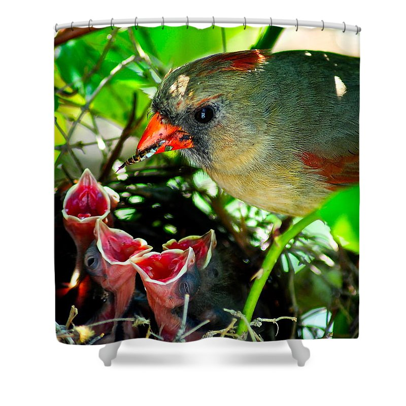 Cardinal Shower Curtain featuring the photograph Insect For Diner Agaain by Frozen in Time Fine Art Photography