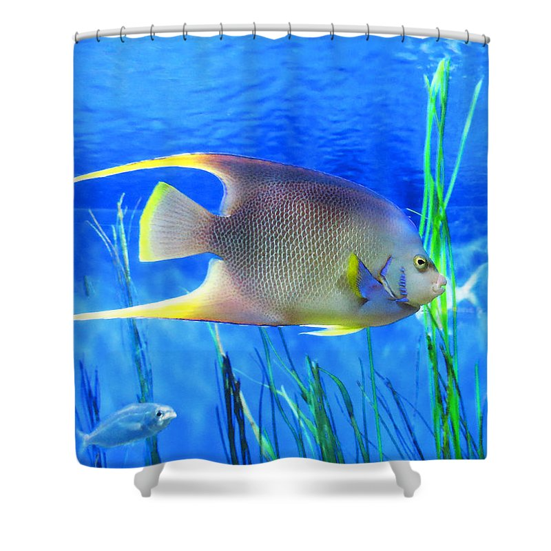 Into blue tropical fish by sharon cummings shower for Tropical fish shower curtain