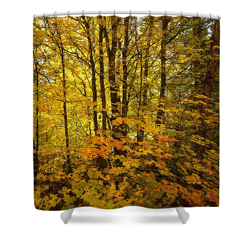 Forest Shower Curtain featuring the photograph Into The Woods We Go by Saija Lehtonen