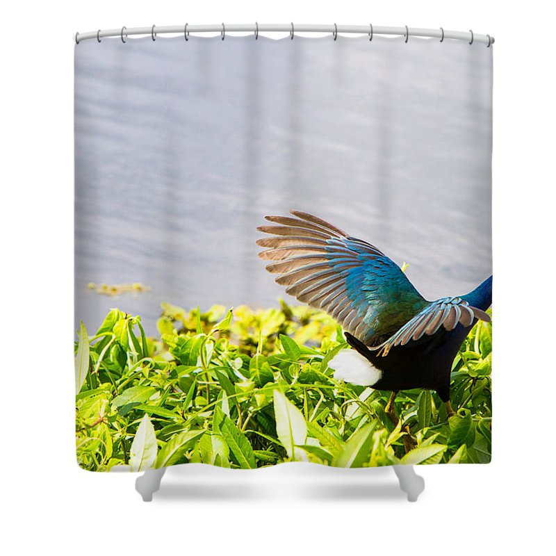 Art Shower Curtain featuring the photograph Iridescent Color Of Purple Gallinule by Ellie Teramoto