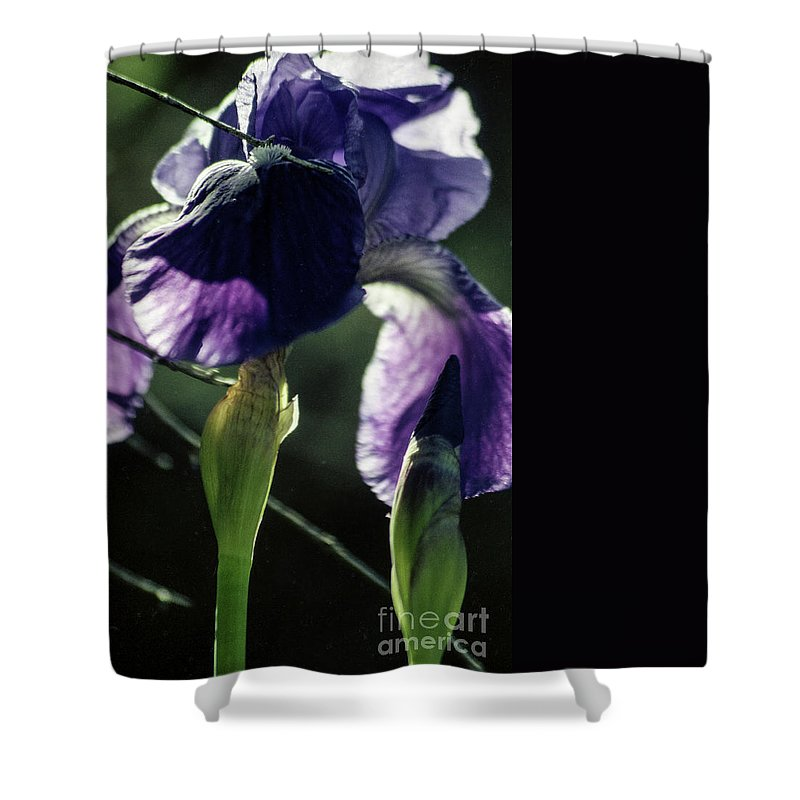 Flowers Shower Curtain featuring the photograph Spring's Gift by Kathy McClure