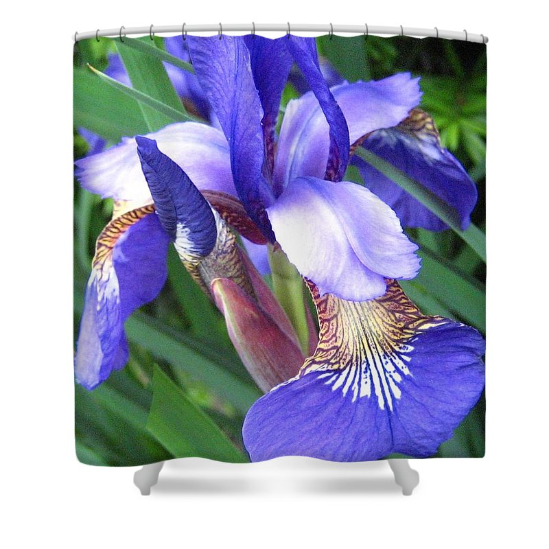 Digital Floral Photography Shower Curtain featuring the photograph Iris by Lillian Hibiscus