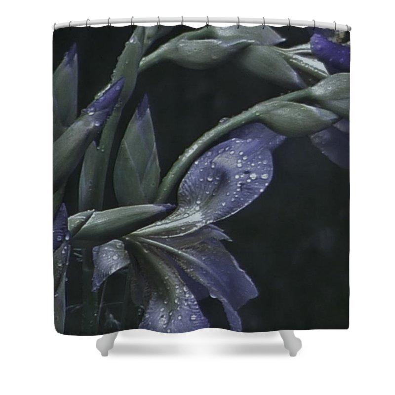 Photograph Shower Curtain featuring the photograph Iris Rain by Barbara St Jean