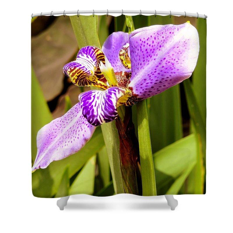 Iris Shower Curtain featuring the photograph Iris by Zina Stromberg