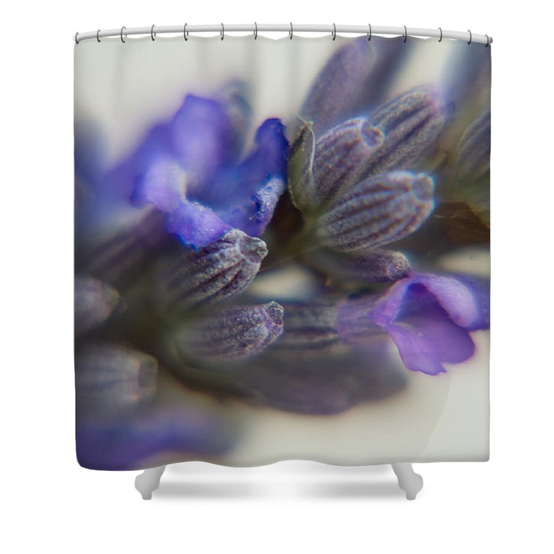 Photography Shower Curtain featuring the photograph Floral Symmetry by Dave Byrne