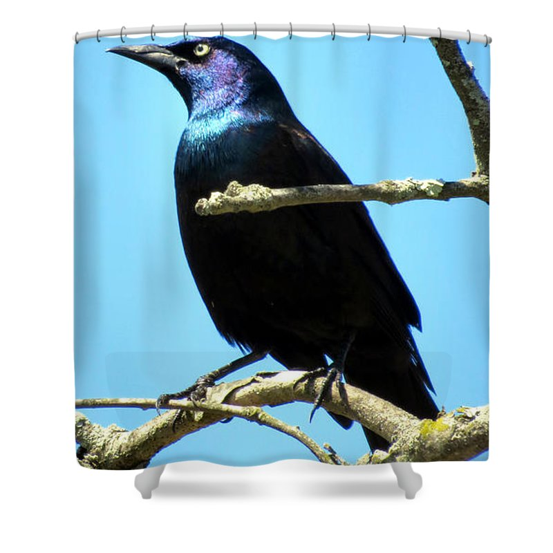 Grackle Shower Curtain featuring the photograph Irridescent by Art Dingo