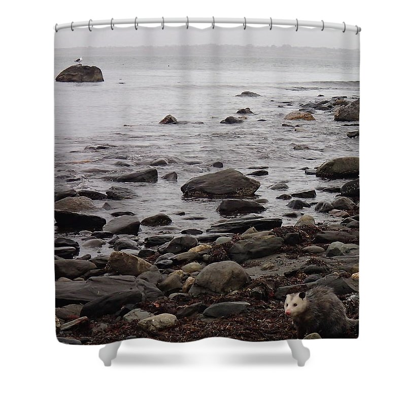 Nature Shower Curtain featuring the photograph Island Opossum by Robert Nickologianis