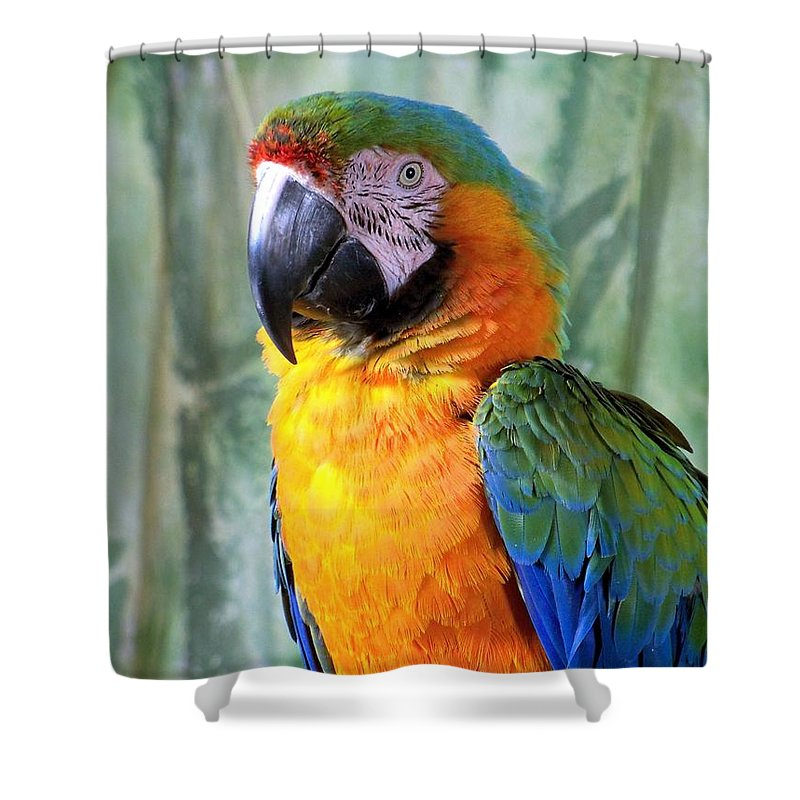 Exotic Birds Shower Curtain featuring the photograph It's A Jolly Good Day by Lingfai Leung