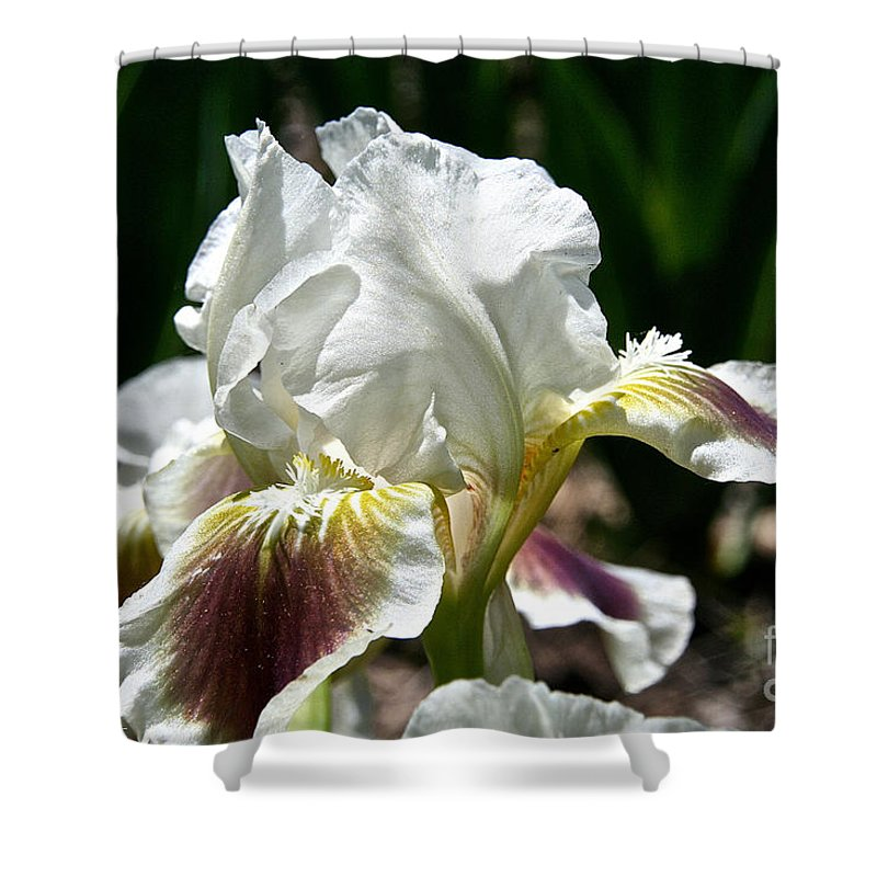 Flower Shower Curtain featuring the photograph Ivory Sapphire by Susan Herber