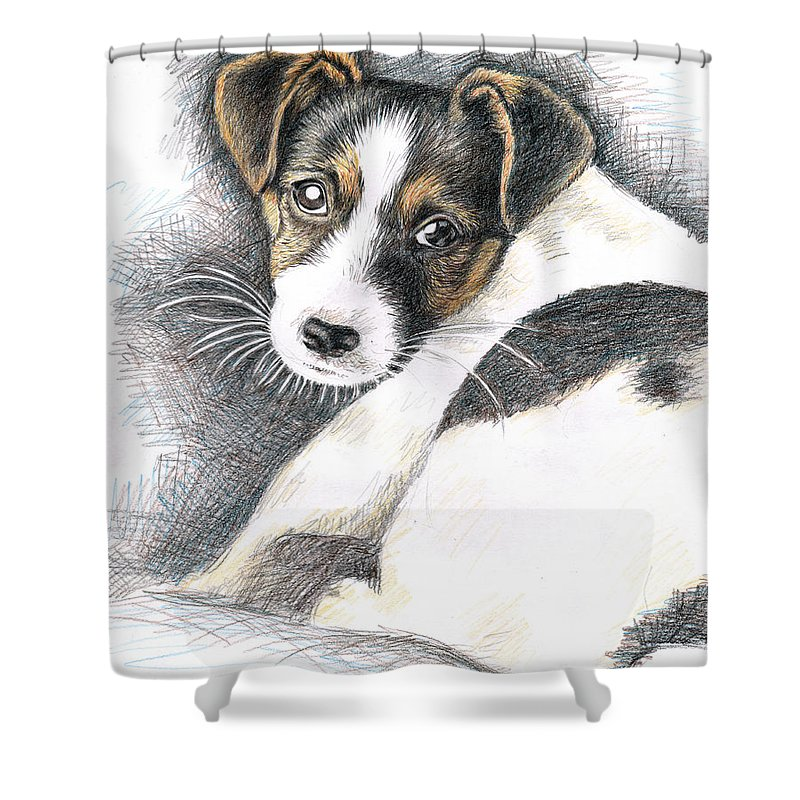 Dog Shower Curtain featuring the drawing Jack Russell Puppy by Nicole Zeug