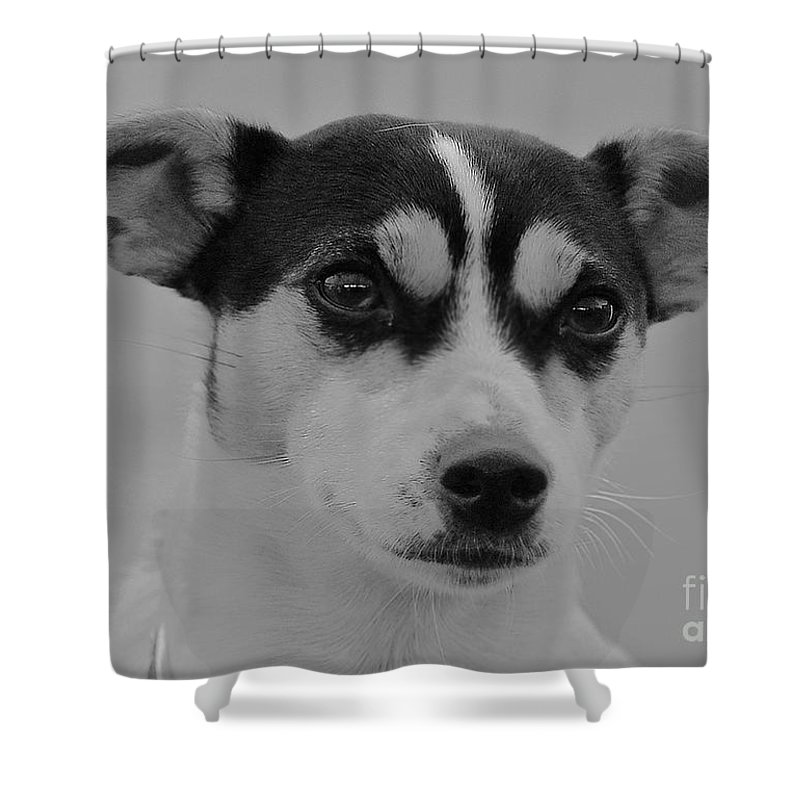 Jack Shower Curtain featuring the photograph Jack Russell by Rob Hawkins