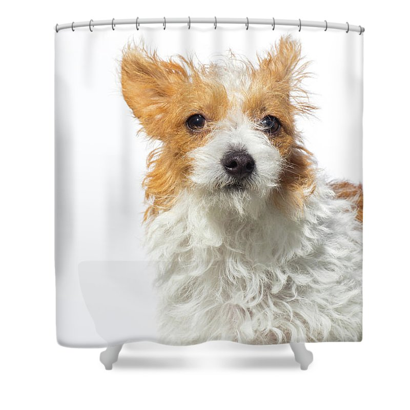 Pets Shower Curtain featuring the photograph Jack Russell Terrier - The Amanda by Amandafoundation.org