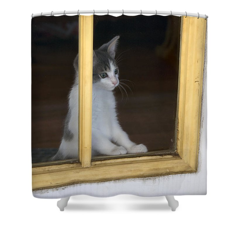 Animals Shower Curtain featuring the photograph Jackson The Inquisitive Kitty by Thomas Woolworth