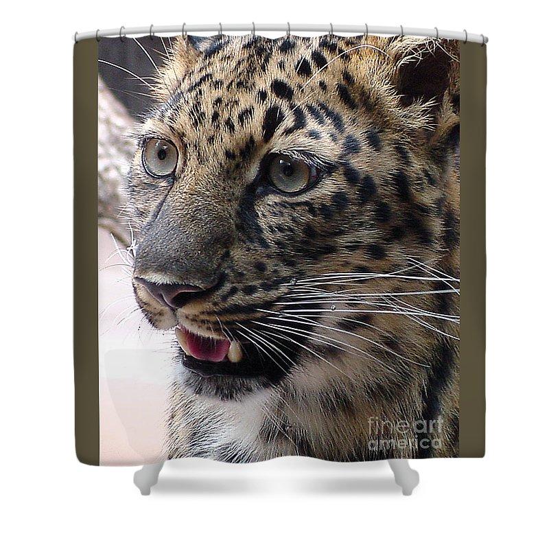 Jaguar Shower Curtain featuring the photograph Jaguar-09499 by Gary Gingrich Galleries