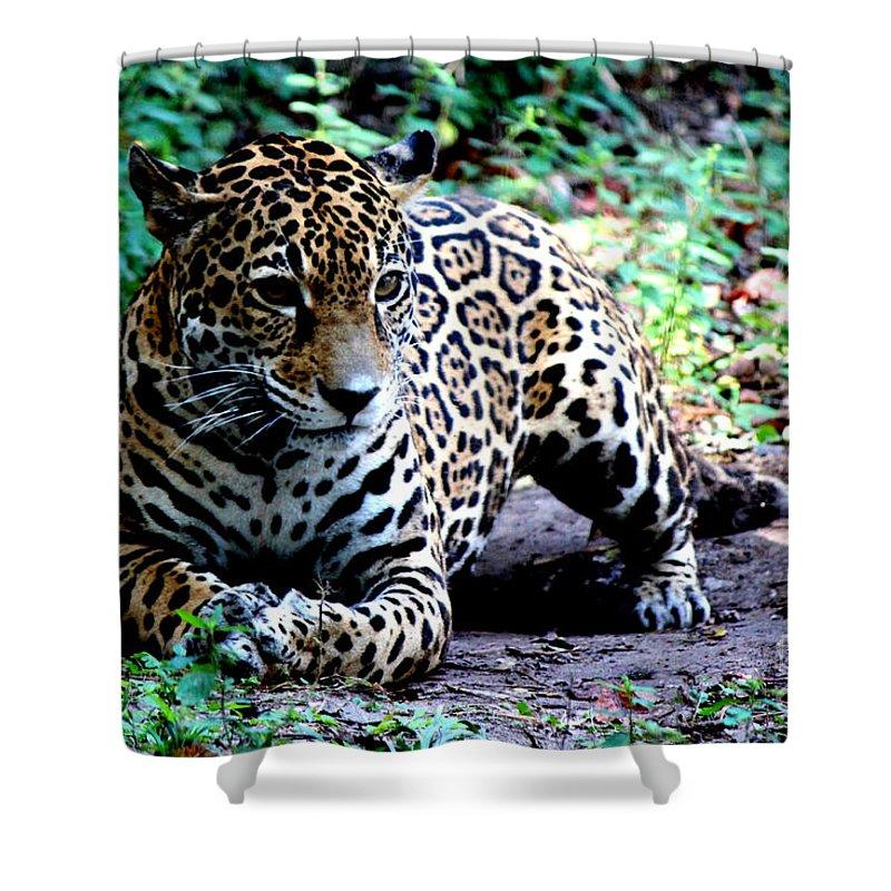 Crouching Jaguar: Jaguar Crouching Shower Curtain For Sale By Kathy White