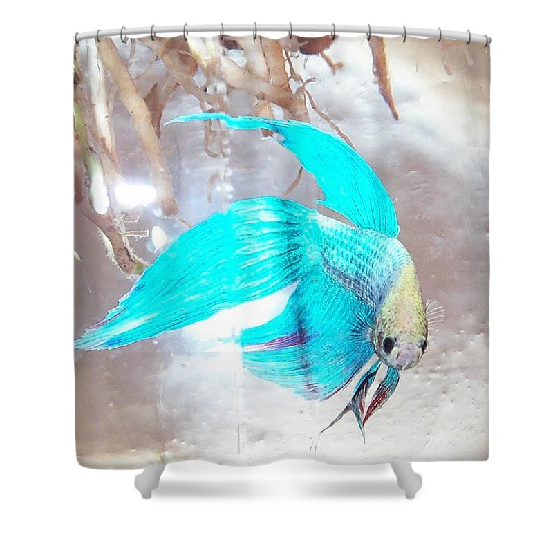 Fish Shower Curtain featuring the photograph Jake Called Him Rock by Barbara McDevitt