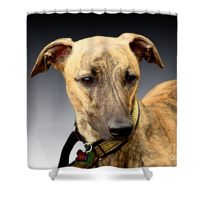 Brindle Shower Curtain featuring the photograph Jake by Linsey Williams