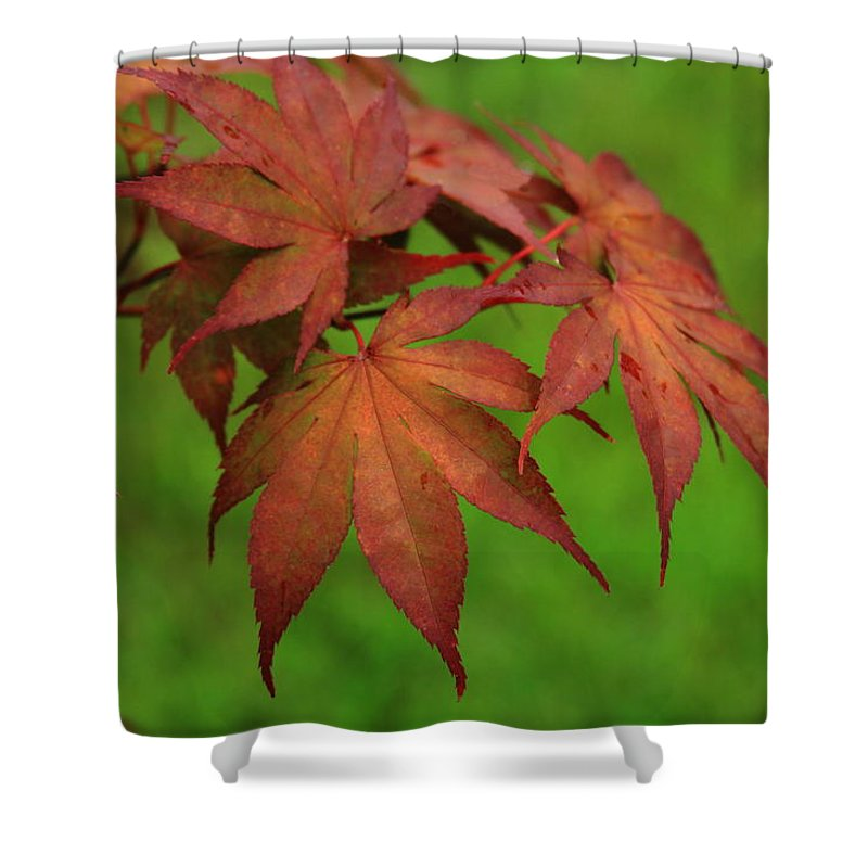 Reid Callaway Japanese Maple Shower Curtain featuring the photograph Japanese Maple Autumn Colors by Reid Callaway