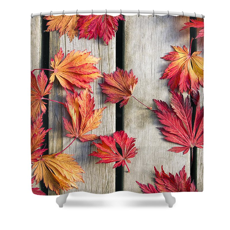 Japanese Shower Curtain featuring the photograph Japanese Maple Tree Leaves on Wood Deck by David Gn